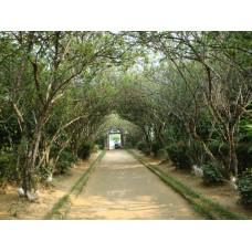 Thăm nhà vườn Huế