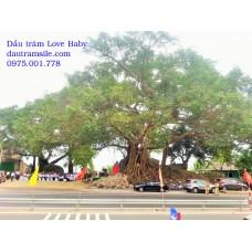 Đề nghị xây dựng cây đa Đá Bạc thành biểu tượng sinh thái - văn hóa - du lịch.